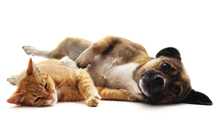 Happy, healthy dog and cat